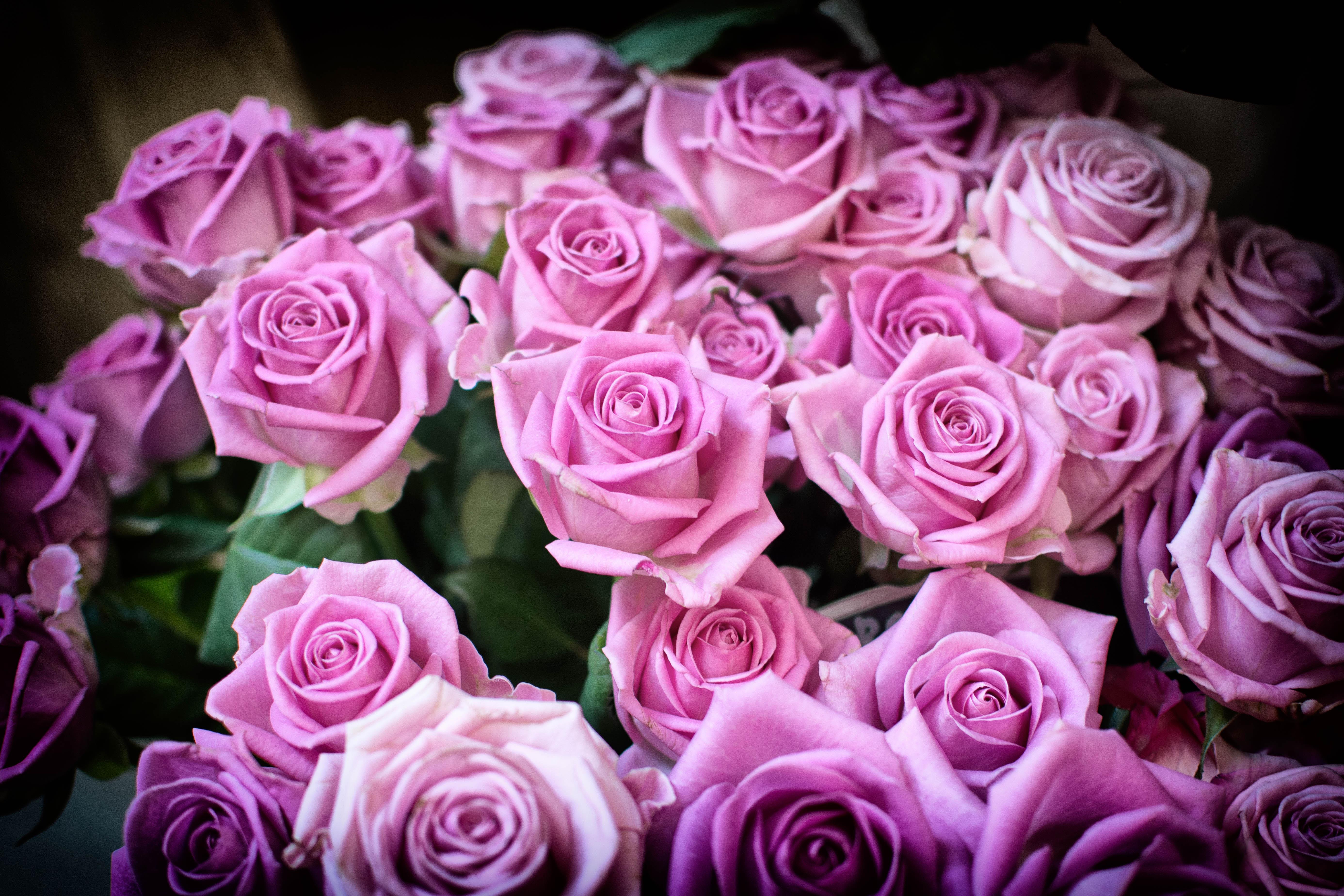 Три красивые розы фото
