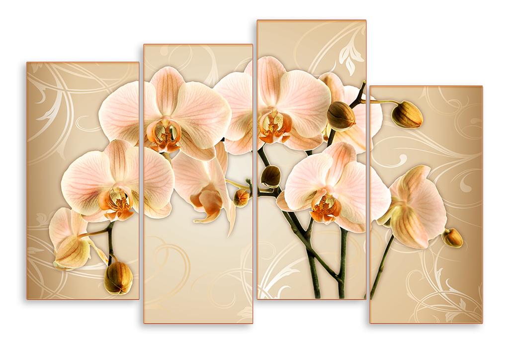Орхидеи для постера