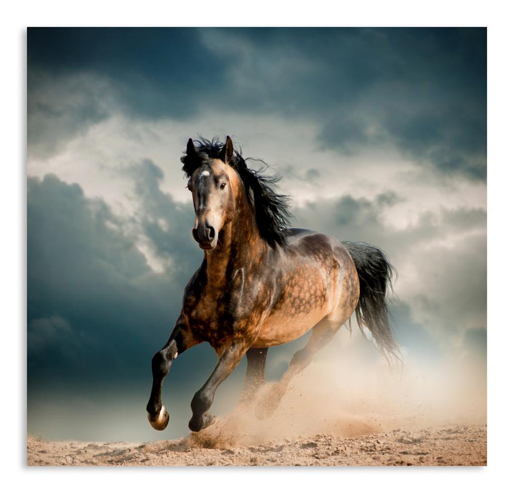 постер бегущая лошадь профиля