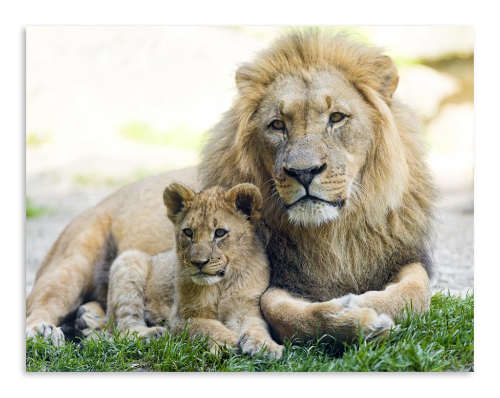 Картинки для детей лев и львенок, симс домов комнат