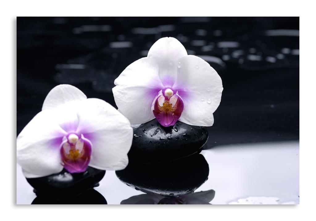 Фото для постеров орхидеи